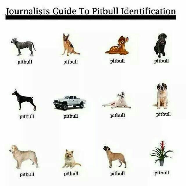 2015-09-09-1441826812-4655468-journalistpitbull