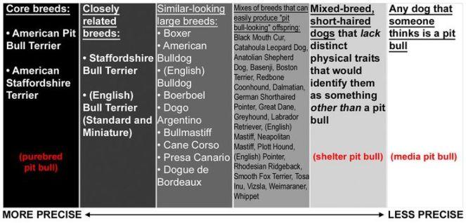 breed-identifucation