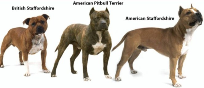 staffies-compared