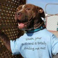 Pit Bull discrimination is all but dead!