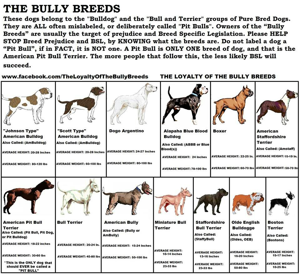 Breed specific legislation how it affects american pit bull breed specific legislation how it affects american pit bull terrier owners the anti breedism alliance geenschuldenfo Images