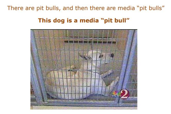 media pit bull.PNG